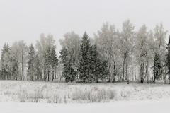 Andrius_Pavelko-Ziema